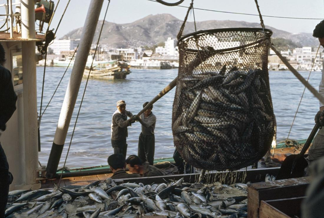 Unloading mackerel at the Pusan fish market